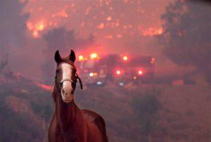 horse near wildfire