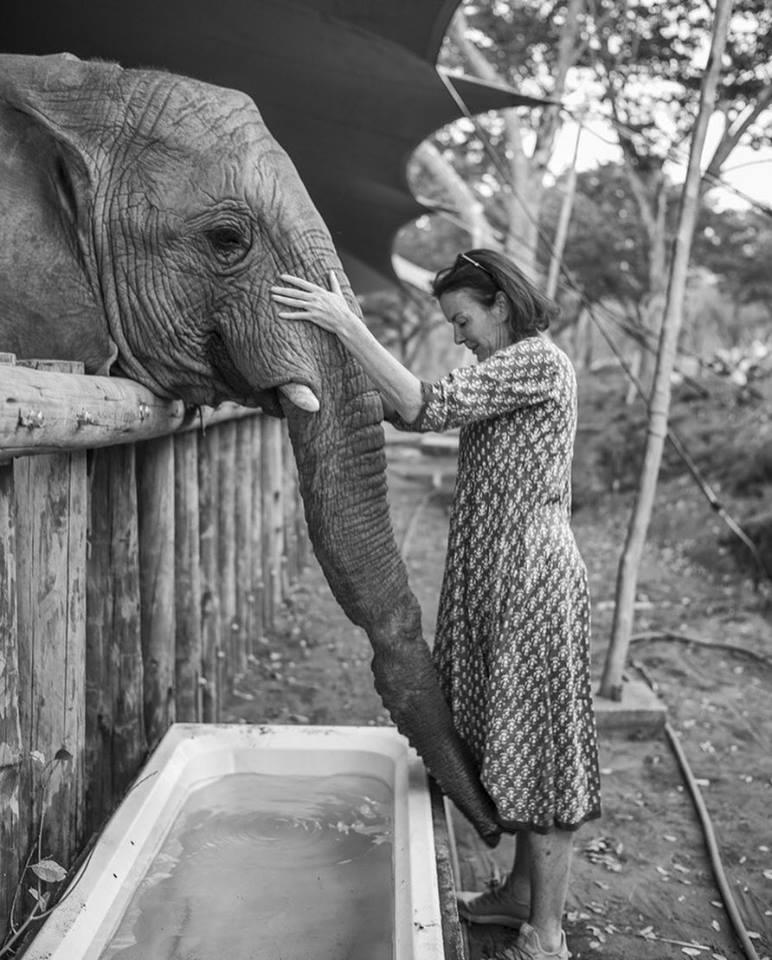 roxy and elephant