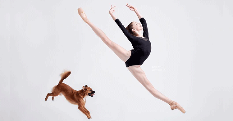 ballet dogs