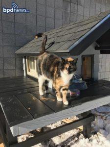 swat cat loves her condo