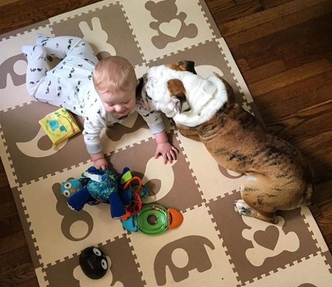 bulldog and baby