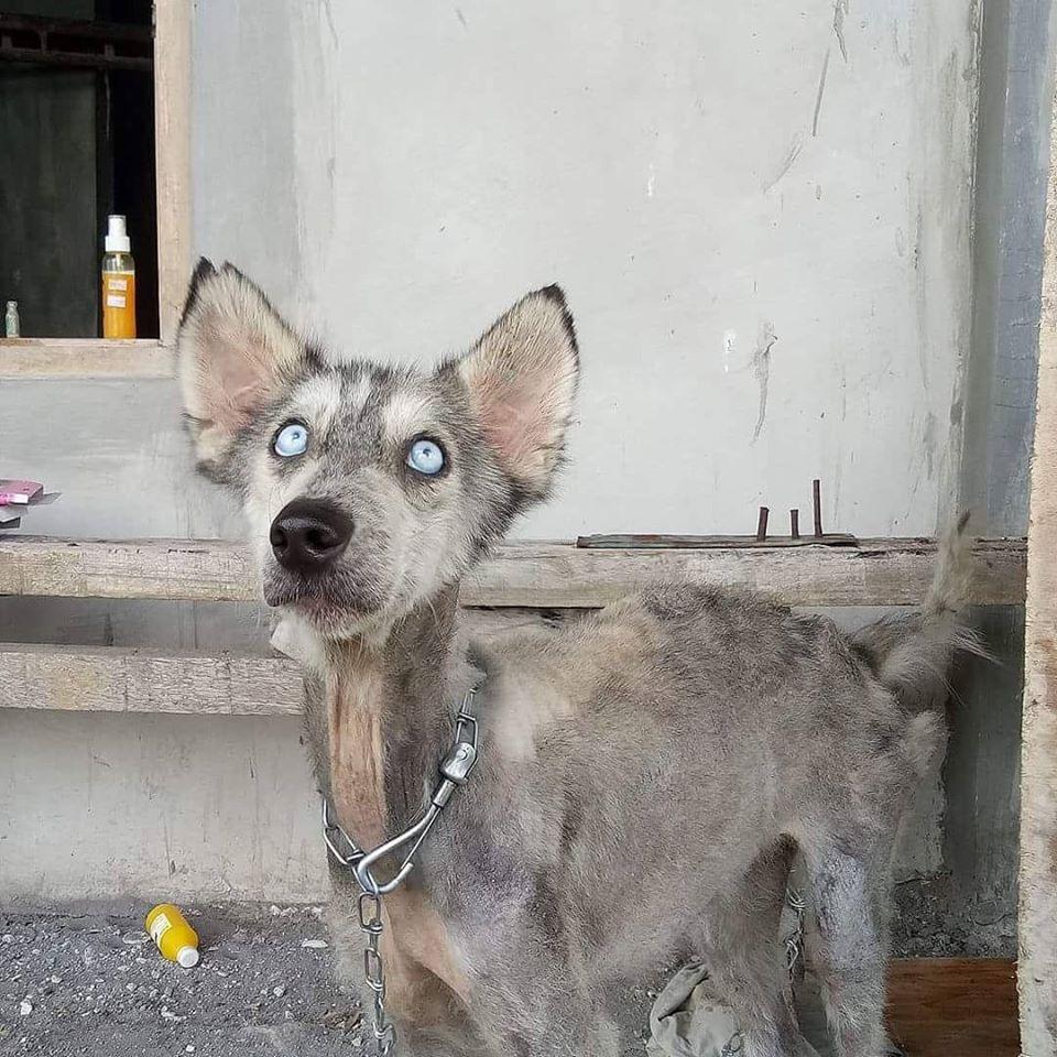 hope dog