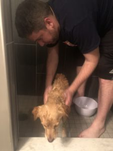 suzy gets flea bath