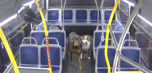 lost dogs in bus