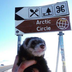 adventures with bandit