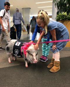 sfo wag brigade pig