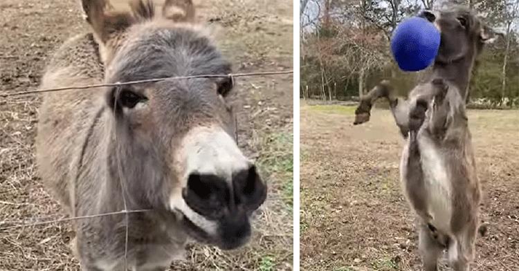 donkey dance
