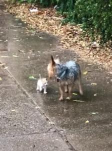 hazel with stray kitten
