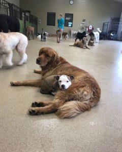 edna cuddles dog