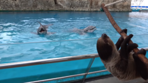 chico meets dolphins
