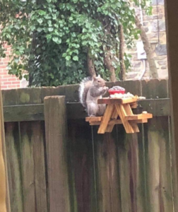 squirrel picnic table