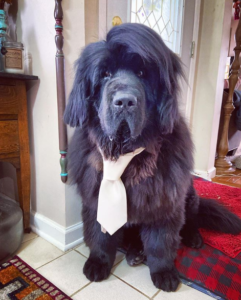 hank the newfie hairstyles