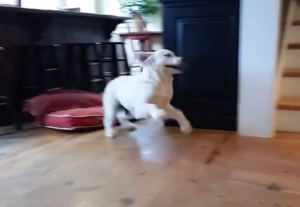 puppy freak out