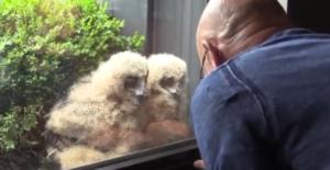 jos and owl chicks