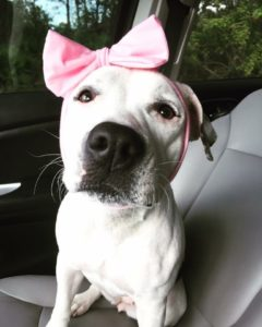 Rescued Bait Dog Becomes Real-Life Disney Princess And Now Has Her Own Show!