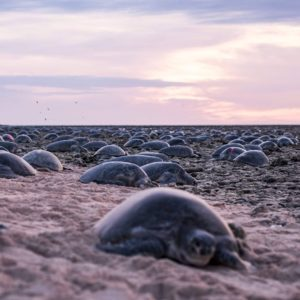 green turtles on shore