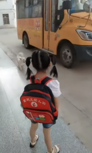 dog takes girl to school bus