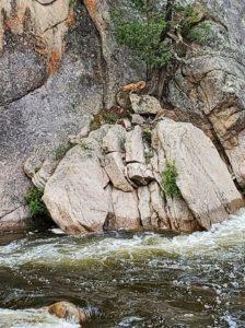 mowgli stranded on rock
