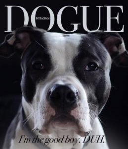 dogue dogs