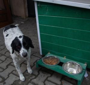 kupata's dog house