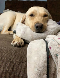 winnie and her blanket