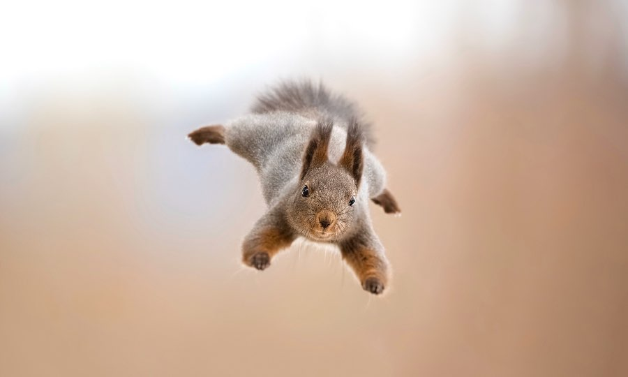 Wildlife Photographer Captures Cute Video Of Baby Squirrel Eating And We're In Love. – InspireMore
