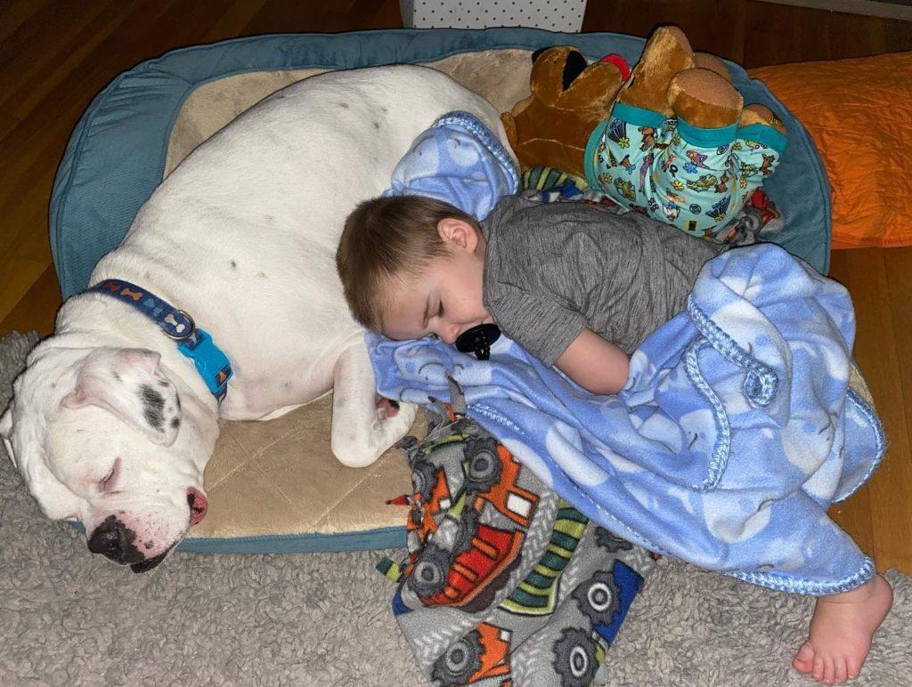 brutus and finn sleeping