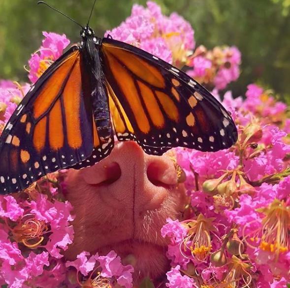 milo sniffs butterfly