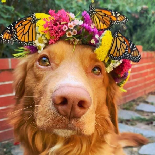 milo in butterfly flower crown