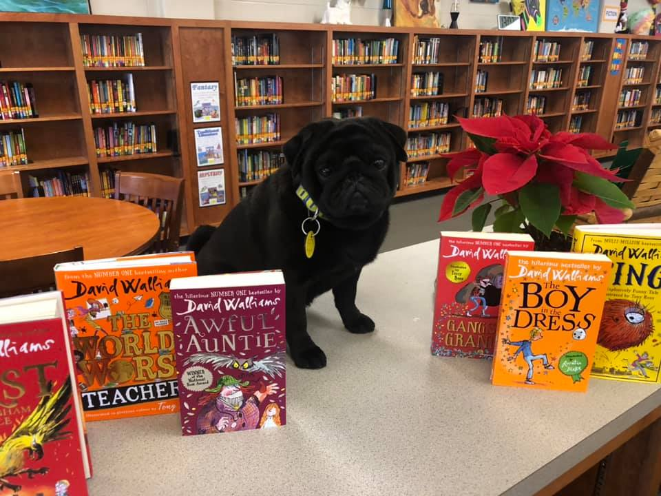 booker t pug with books