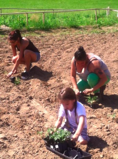 jijak planting