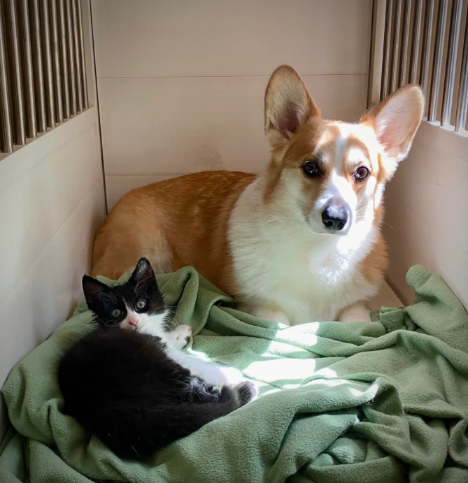 rescue cat with dog