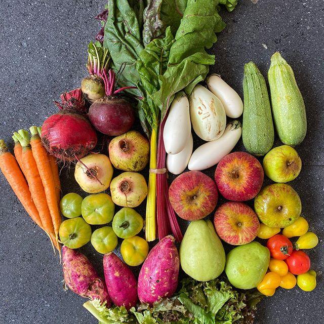yolcan produce