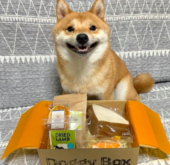 uni dog food