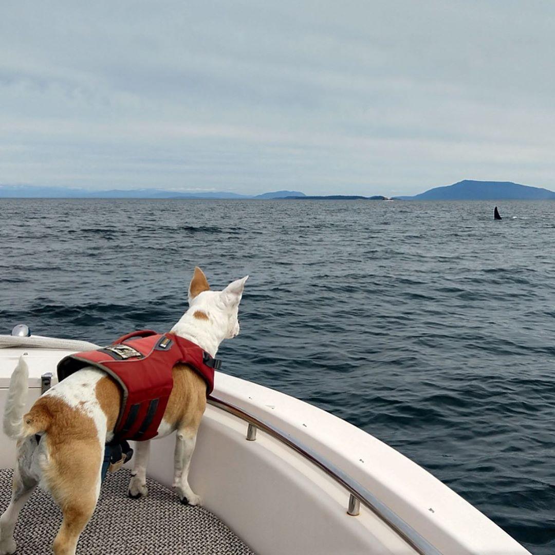 eba watches whale