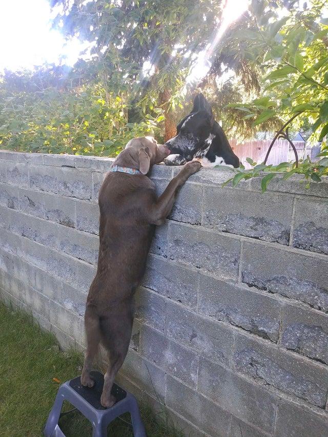 dog bffs