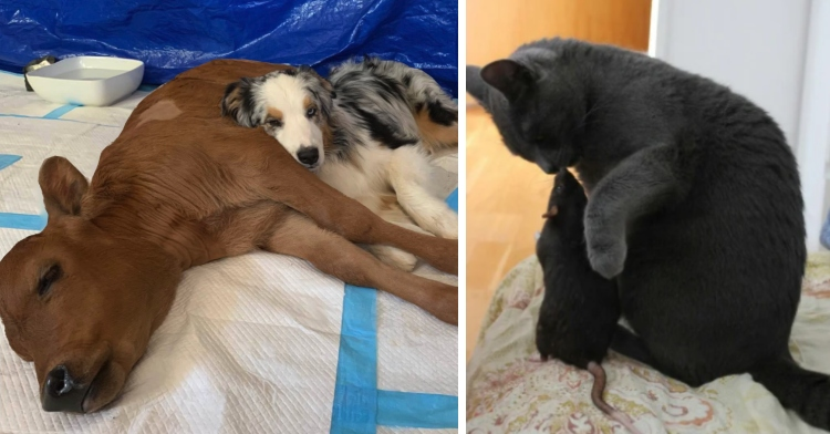15 Animal BFFs Who Are Proving Friendship Knows No Bounds