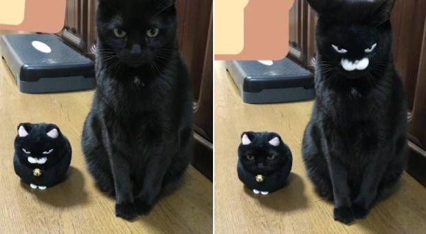 cat face swap