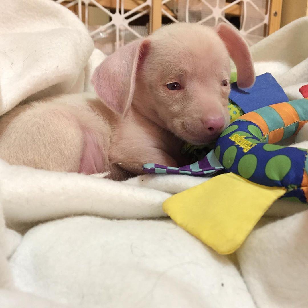 piglet puppy