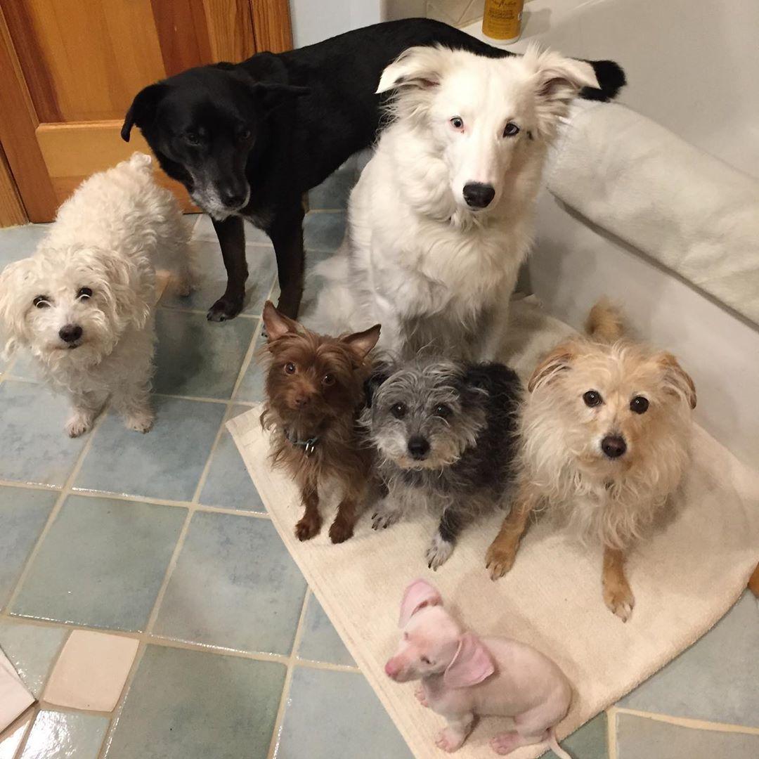 piglet and his siblings