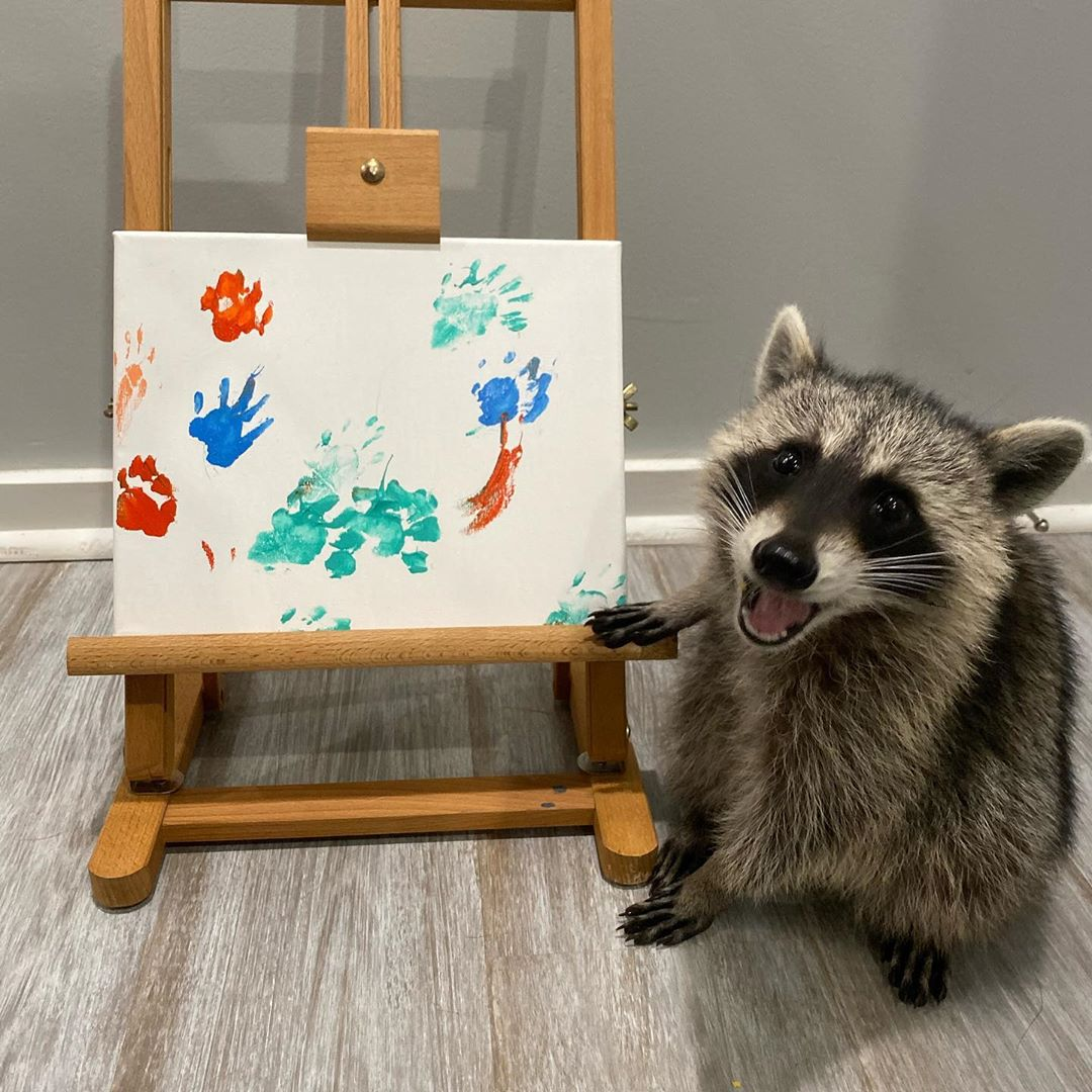 painting raccoon