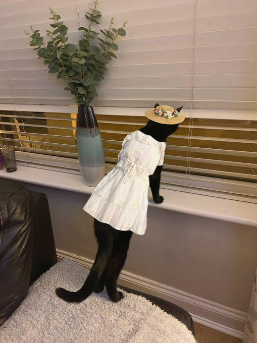 cat in dress and hat