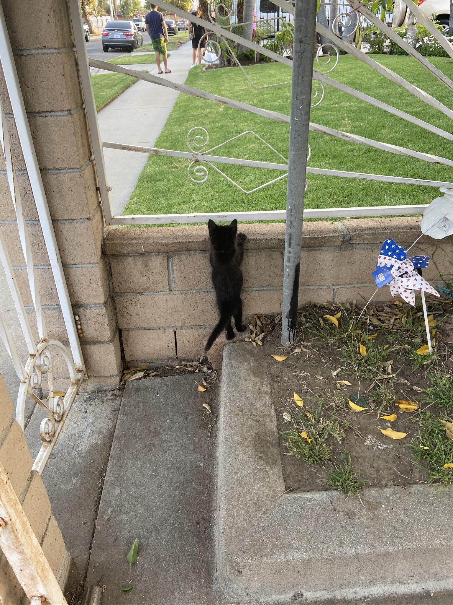 kitten peeking out at yard