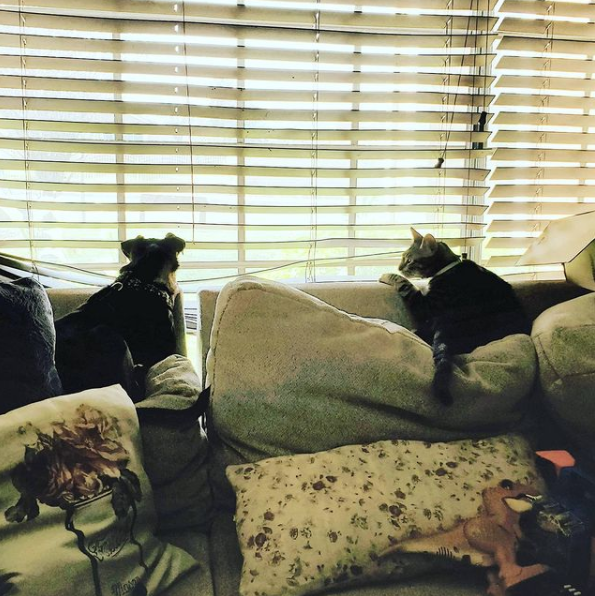 dog and cat looking out window