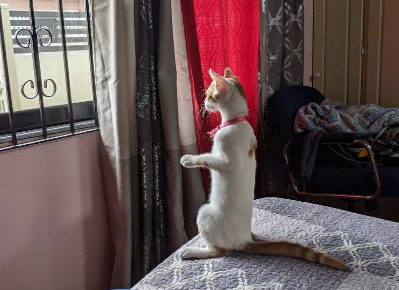 cat sitting up