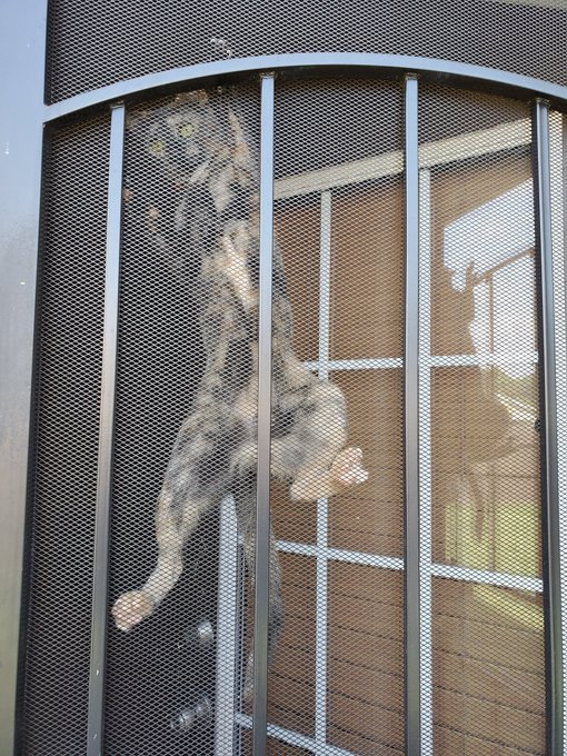 cat hanging on screen