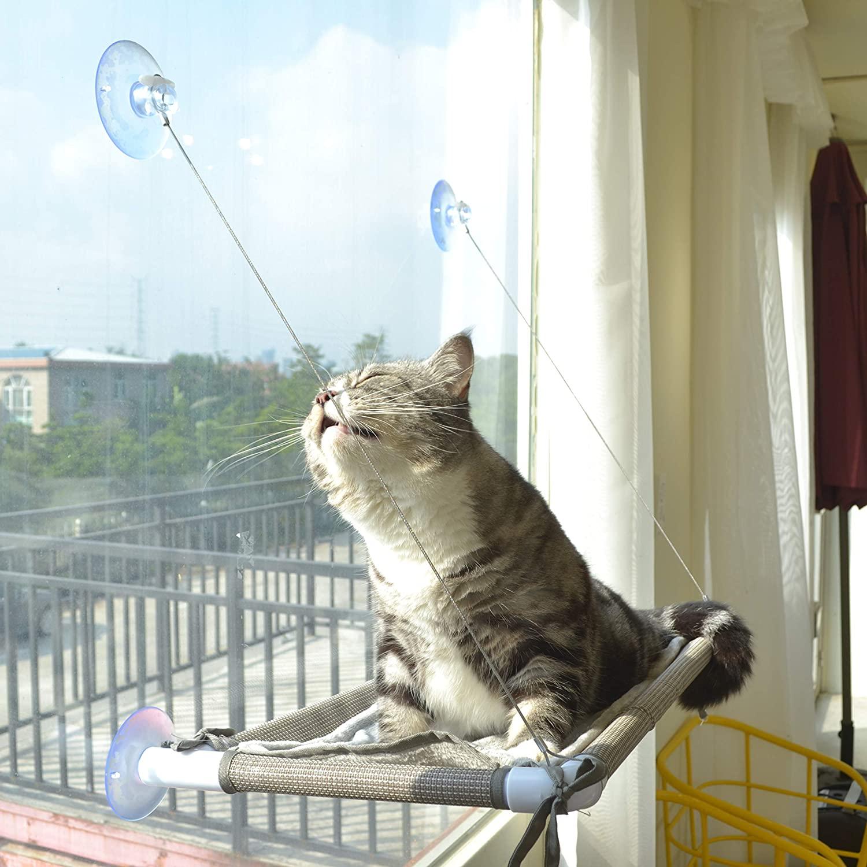 cat on window perch
