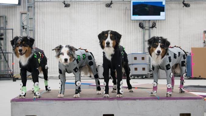 motion capture dogs