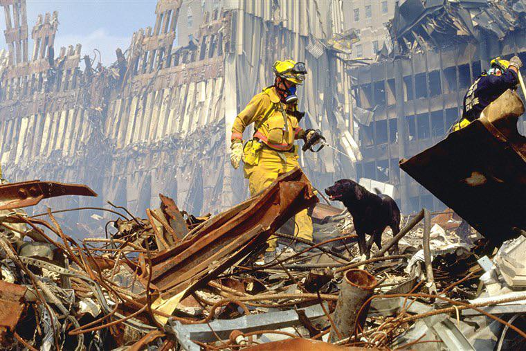 9/11 search dog