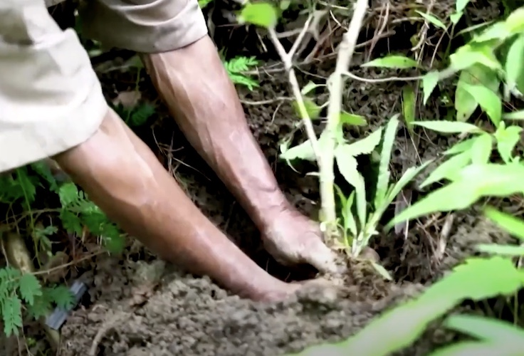 sadiman planting a banyan tree in indonesia
